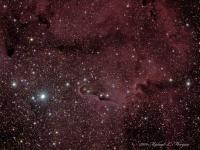 """IC1396 is an open cluster located in Cepheus with associated nebulosity, several dark nebula among them B161 in the upper right, 1396A the """"Elephant's Trunk"""" near the center of the image and vdb142 near the end of the trunk. North is up.  Taken @ Cherry Springs State Park, PA   LRGB, William Optics FLT-110, Astro-Tech Field Flattener, QSI583wsg, Celestron CGE mount, Watec 120N+ used as guide camera off-axis.  Guided with PHD Guiding, acquired in AstroArt, preprocessed in Deep Sky Stacker and processed in Photoshop.  Luminance: taken 09-13-09, 12 X 5 minutes unbinned RGB: taken taken 09-14-09, 5 frames each @ 4 minutes binned  2 X 2 Total exposure: 2 hours"""