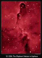 Approximately 3000 light years away, the elephant's trunk nebula is a zone of dark dust in a gas cloud hundreds of LY across in the constellation Cepheus. Taken 9-16-10 from Nazareth, PA 10 x 5min Ha filtered OSC Atik 16C CCD camera. False Ha color added in PS with Carboni's Astronomy Actions. 90mm Megrez APO, Losmandy GM-8 mount. Nebulosity and PHD.